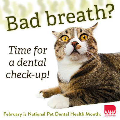 pets need dental care too