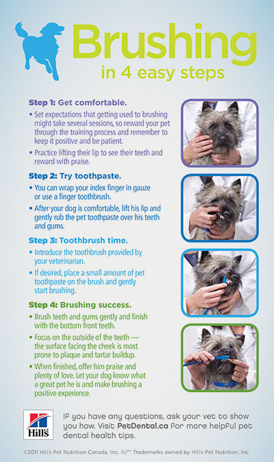 How to brush your dogs teeth